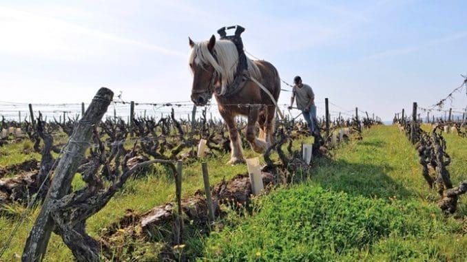 הואט מייצרים יין לפחות משנת 1928