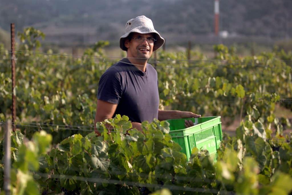 יקב וורטמן מציע בלנד של 60% פטי וורדו, 30% מלבק, 10% קברנה סוביניון, מכרמים נבחרים בעמק שפיה