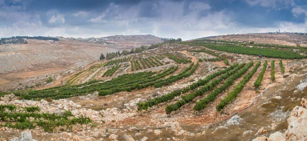 יקב הר ברכה בהר גריזים משקיף על בקעת הירדן