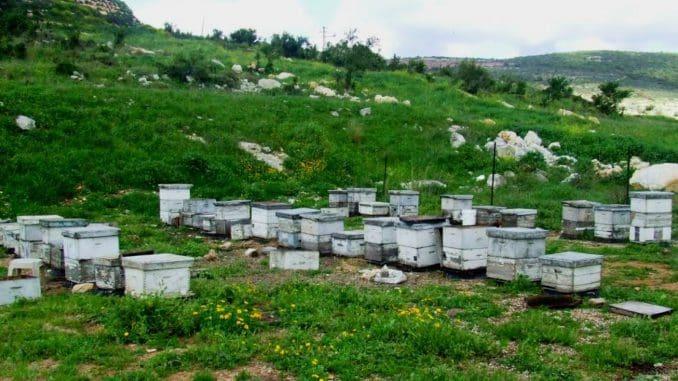 לטעום, לחוות וללמוד על עולמן הקסום של הדבורים