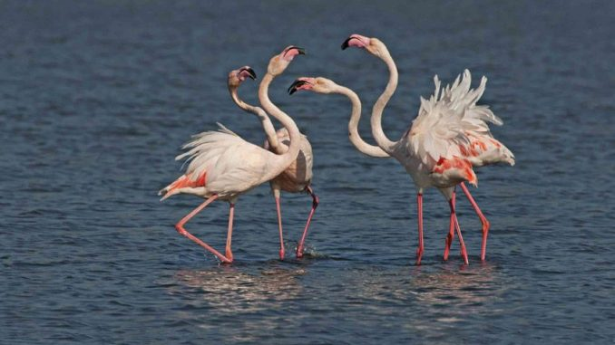 תצפית והסבר על תהליך ייצור המלח ועל מגוון ציפורי המים המקננות על שפת בריכות המלח