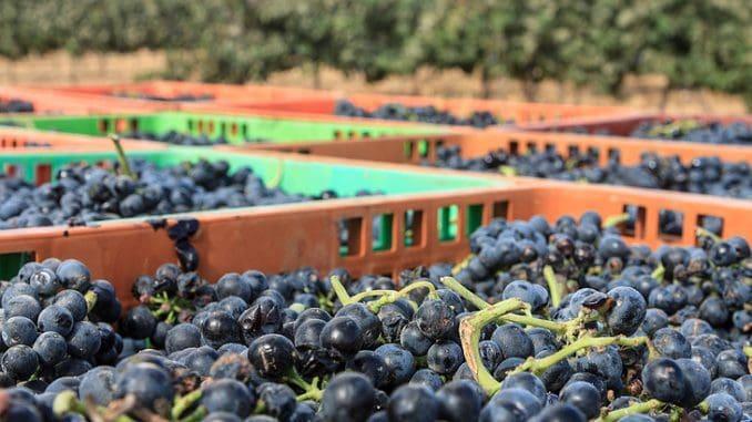 הקורס לעשיית יין – משלב לימודים תאורטיים וייצור יין אישי בדמיג'אן מליווי הבשלת הענבים בכרם עד לבקבוק