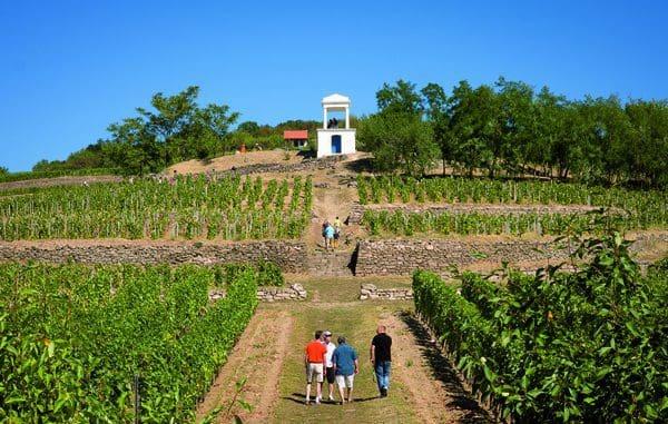 היקף הייצור הכולל של ענף היין בהונגריה למעלה מ-260 מיליון ליטר בשנה, לעומת כעשירית מכמות זו בישראל