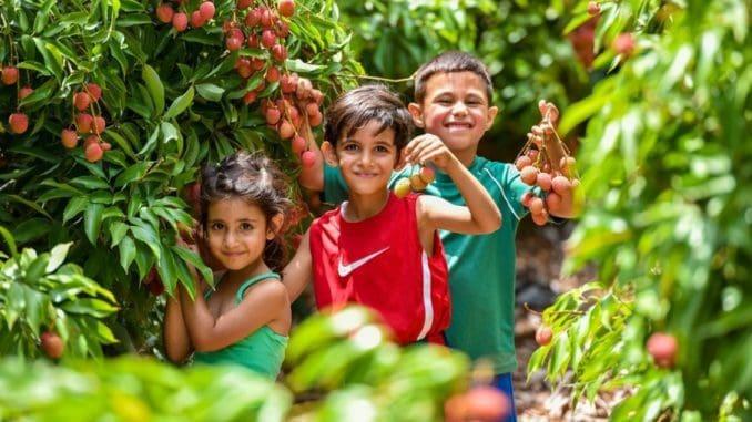 חוויית קטיף עצמי, היישר מעצי הפרי העסיסיים, ואכילת הפירות מיד עם קטיפתם