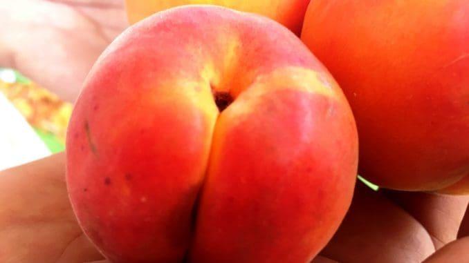 זן הוורטיג' משנה באופן מהותי את מראה הפרי כפי שהכרנו. צבעו אדום, ולא כתום, דומה בצורתו יותר לאפרסק. גדול יחסית וטעמו מתוק