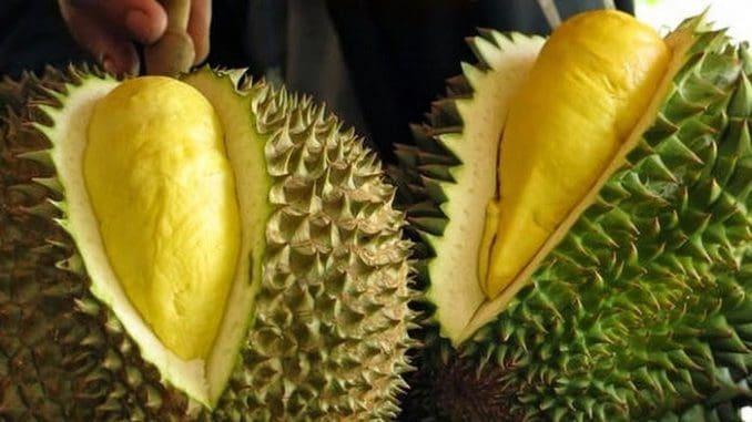 """הפרי הכי אקזוטי של תאילנד נקרא """"דוריאן"""", ואין פלא שהוא מכונה """"מלך הפירות התאי"""""""