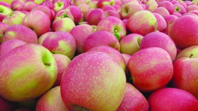 כ- 90% של התפוחים בישראל מגודלים באזור הצפון, בהרי הגליל והגולן, בגבהים של לפחות 600 מטר
