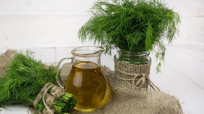 השמיר משמש אלפי שנים כצמח תבלין וריח, וצמח מרפא ברפואה המסורתית