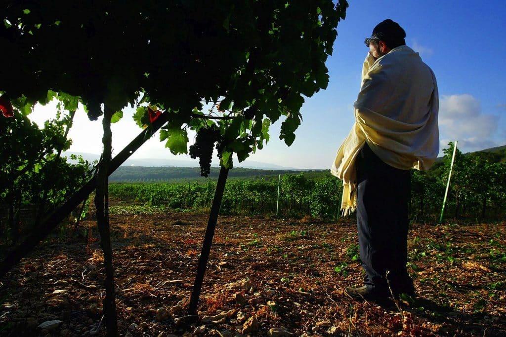 הצלם דוד סילברמן שמתעד ומלווה את התפתחות תעשיית היין הישראלית, יציג במסגרת התערוכה תמונות נבחרות מעולם היין שלו
