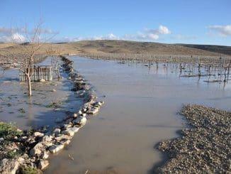 גם ככה יכול להיראות כרם במדבר. צילום ערן רז הידוע בכינויו ״ננה״ ונחשב לחלוץ ומוביל נטיעות הכרמים באזור