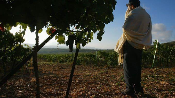 התמונה שפתחה את השער לענף היין. צילום דוד סילברמן גטי