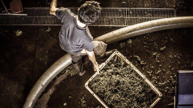 תמונת השבוע: בציר ביקב שאטו גולן. אורי חץ בפעולה. צילום עופר בלנק
