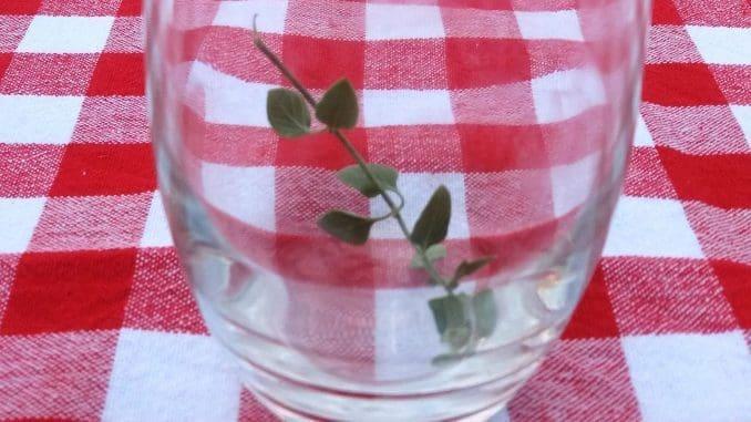כוס עם ענף זוטה לטעם - יצירת אמנות. צילום אורי שלזינגר