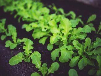 עשבי תיבול מתארים את כל הצמחים שבהם ניתן להשתמש לתיבול ללא צורך בייבוש, טחינה, בישול או עיבוד