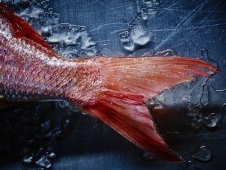 הדג שדן פרץ צילם למסעדת משייה – התמחות בתחום האוכל