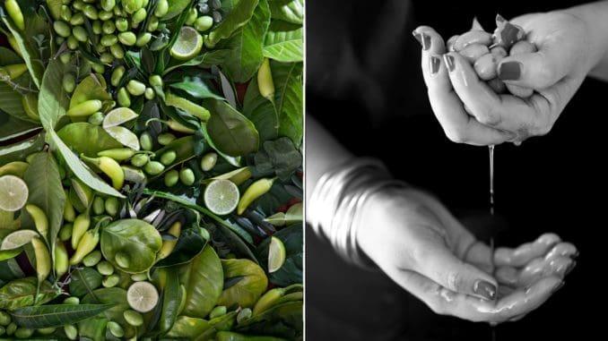 זית ירוק – השפית נוף עתאמנה אסמעיל מתוך תערוכת COLORFOOD נעמן. צילום דן לב