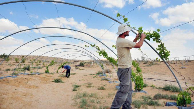 הזדמנות להראות את פניה היפות של רמת הנגב ולהחזיר אהבה לחקלאים העובדים מדי יום עבור הציבור הישראלי. צילום רפאל בן ארי