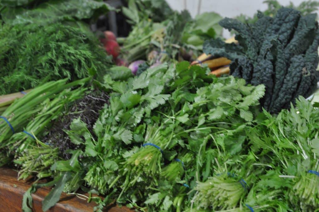 הרבה ירוקים יש גם במלוא הטנא - מרכז מבקרים וחווה בה מגדלים ומוכרים ירקות ופירות אורגניים. צילום איריס לוי