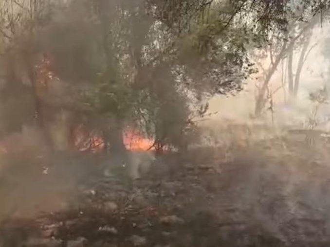 השריפה בכפר אוריה כמעט הגיעה לכרם של לינה סלוצקין מיקב קדמא – היקב והכרם לא נפגעו. צילום מיוטיוב