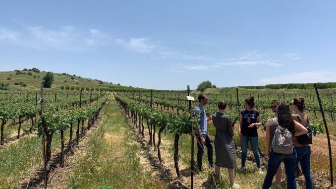 סטודנטים מהמרכז הבינתחומי שהגיעו לכרמי יקב רמת הגולן במסגרת מחקר סודי לקידום רעיונות חדשים להגדלת צריכת יין. צילום דנאל יפה