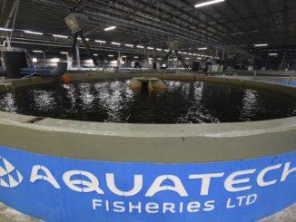 ברמונדי ישראלי גדל במתקן חוות הדגים של החברה ברמת נגב 21 מכלי גידול