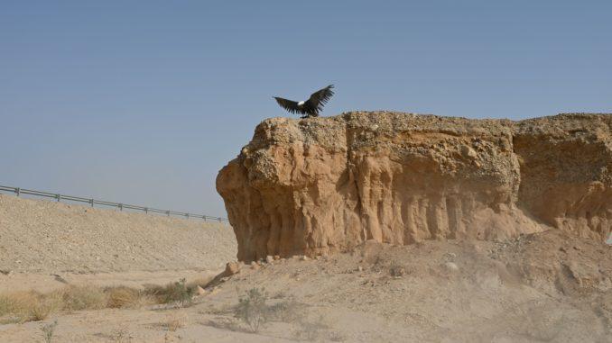 הערבה - חבל ארץ פראי ומיוחד שמציע מגוון רחב של פעילויות, מקומות לינה וקולינריה מגוונת. צילום איריס לוי