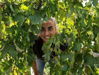 אריאנה אוקיפינטי למדה יינות באיטליה, אחר כך חזרה לסיציליה מולדתה ואז התחיל המסע המפרך שלה. צילום מדף הפייסבוק