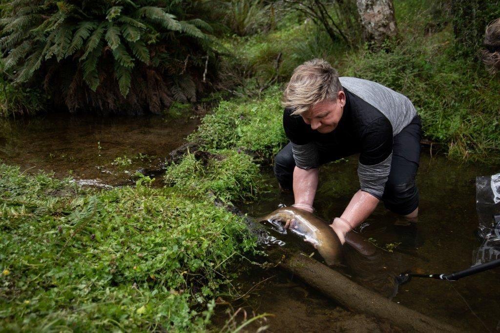 •צייד צלופחים בידיים חשופות באמצעות טכניקות מאוריות מסורתיות עם דייג מקומי בניו זילנד