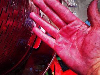 שבוע שני ברציפות שתמונה של ניר חן מהיקב האקדמי מרום אריאל מככבת בראש המדור. השבוע – סחיטה של ארגמן מרמת נגב אחרי תסיסה במשך עשרה ימים