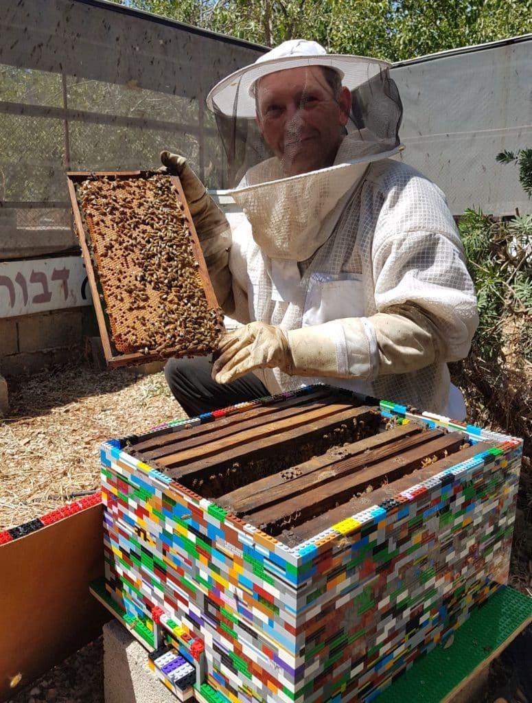 צילום דבורת התבור