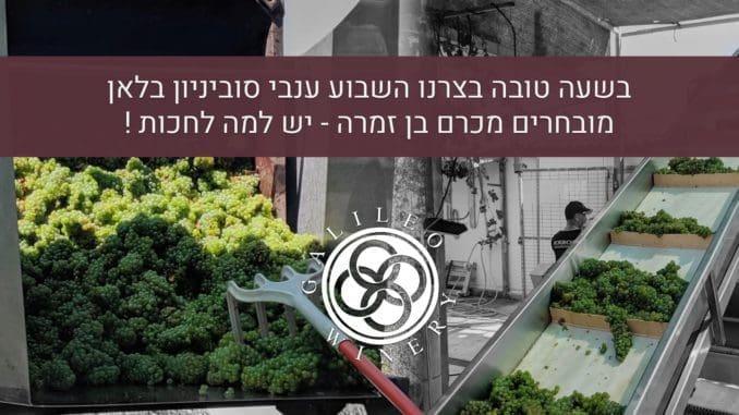 גלילאו סוביניון בלאן 2017 עשוי מ-100% ענבי סוביניון בלאן מכרמים במושב כרם בן זמרה. צילום מדף הפייסבוק