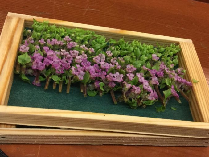 אביטל ענבר בחן את מטבחי יפן ב-50 מסעדות ב-25 יום. הישג אולימפי. אך כמובן גם לא תמיד אפשר לו לדעת מה יש בדיוק בצלחת שלפניו. צילום אביטל ענבר
