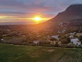 צילום סובב עולם: השמש שוקעת על גפני סוביניון בלאן בכרמי Cape Point בקצה הדרומי של דרום אפריקה שנכנסה ב-26.3 לסגר של 21 יום כשתעשיית היין אינה מועדפת ומוחרגת. זאת כשהבציר טרם הסתיים בחלק מהיקבים ועבודות לאחר בציר יוכלו לבצע רק מי שיסתגרו ביקבים במשך 21 ימים אלה. צילום דוד סילברמן dpsimages