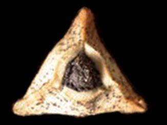 אוזן המן מתוקה – בצק פריך וניל במילוי פרג: מרתיחים יחד בסיר את כל החומרים ומבשל כדי לפתוח את הפרג. צילום דניאל לילה